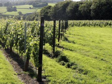 British wine makers are taking on Champagne - Busi Jacobsohn